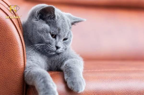 Cách chữa đồ da bị trầy xước do mèo cào